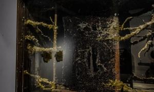 """Maria Koshenkova """"Light-Box 2"""" Wood, Honeycomb, Beeswax"""